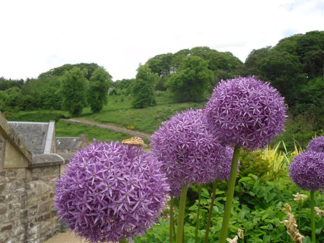 the new lanark roof garden diary, Beautiful flower